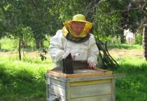 В Волотовском районе насчитывается более 80 пчеловодов