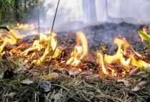 Лесной пожар площадью около 10 га произошел в Солецком районе