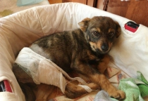 Верный друг: щенок, которого выкинули с балкона