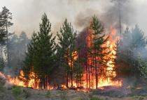 В Новгородской области введено ограничение пребывания граждан в лесах из-за опасности пожара