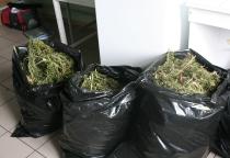 В заброшенном доме Волотовского района наркополицейские нашли три мешка марихуаны