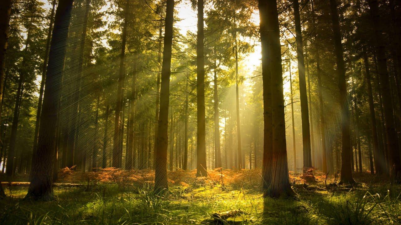 Вредна ли ходьба? картинка по запросу лес