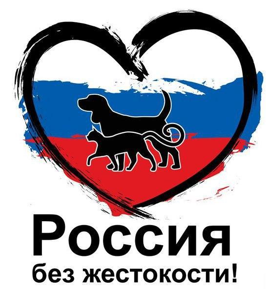 Новгородцы соберутся на пикет против живодёров