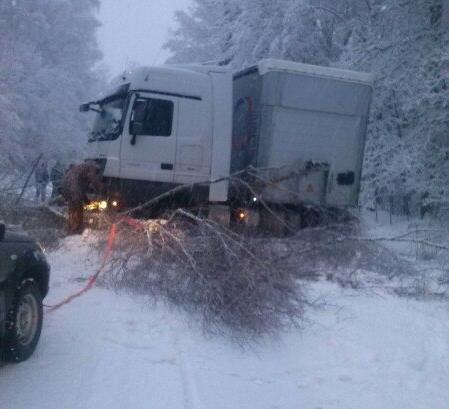 В Маловишерском районе перед автомобилями на дорогу упали два дерева