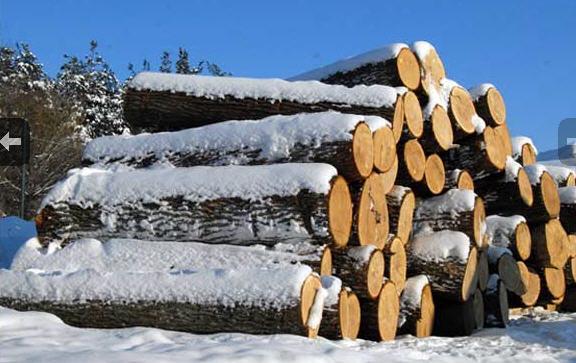 В Новгородской области мужчина погиб от удара веткой во время лесозаготовки