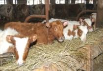 В Солецком районе снизились объемы производства сельскохозяйственной продукции