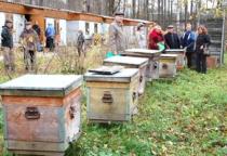 На каждого новгородского пчеловода приходится по шесть пчелосемей