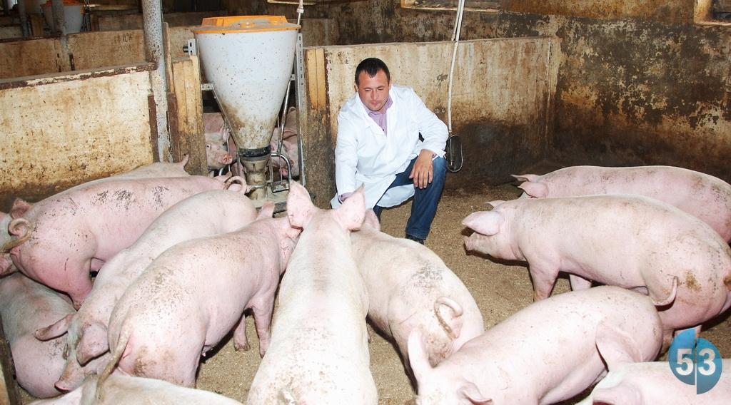 Животные на выращивание и откорм 635