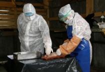В Мошенском районе прошли учения по ликвидации африканской чумы свиней