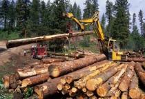 В Маловишерском районе незаконно вырубили лес на 630 тысяч рублей