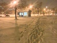 Новгородцы продолжают сообщать властям о нерасчищенных тротуарах