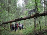 В Валдайском национальном парке открыли экотропу «Иваньи перелески»