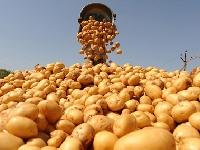 В Новгородской области появится крупное картофелеводческое предприятие АПК