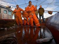 Наш опрос: Более 20% новгородцев предпочитают только местную рыбу