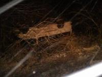 В Крестецком районе разбился микроавтобус, есть жертвы