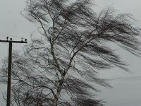В Великий Новгород пришел штормовой ветер