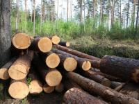 Комитет лесного хозяйства и лесной промышленности Новгородской области переименован в комитет лесного хозяйства