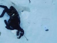 Обнаруженные в Новгородской области трупы овец проверили на сибирскую язву