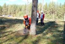 В «Лесорубе-2014» участвуют 7 команд вальщиков из Новгородской области