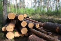 Маловишерцы случайно заготовили 413 кубометров незаконной древесины