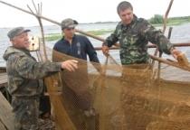 Уловы рыбы в Новгородской области возросли на 70%