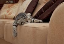 Большинство опрошенных новгородцев планируют покупку дивана