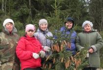 В Новгородской области продолжается акция «Урожай леса»