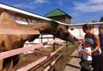 В Батецком районе прошел детский праздник «Ребята и зверята»
