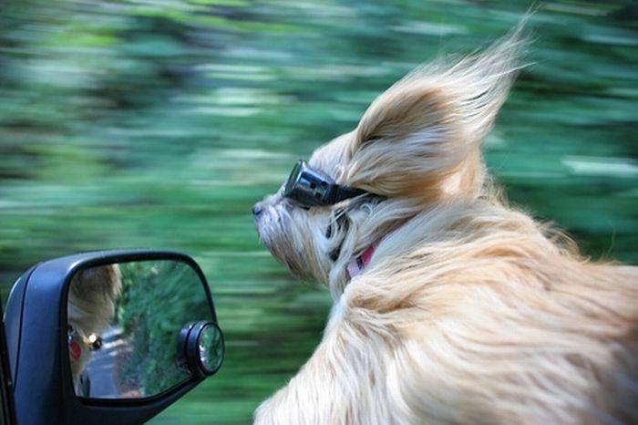 лови меня аз многогрешный ветер
