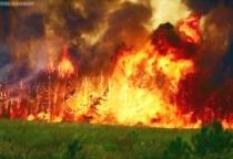 В связи с жаркой погодой в Новгородской области объявлен особый противопожарный режим