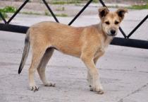 В Шимске отравили бездомных животных