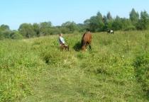 Жители деревни Мамоновщина Маревского района частично отрезаны от «Большой земли»