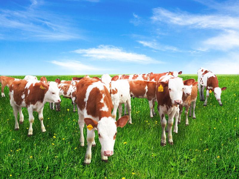 Смотреть картинки про животноводство