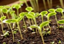 В Шимском и Солецком районах появятся новые сельхозпредприятия
