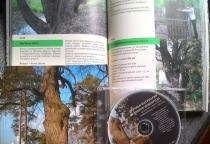Выпущена книга про деревья-патриархи Великого Новгорода