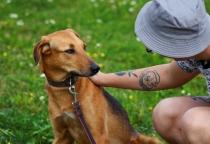Верный друг: о животных, которые ищут свой дом
