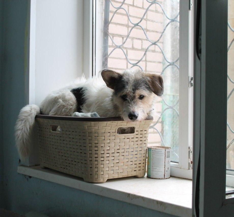 Верный друг: начните новый год с доброго дела - подарите собаке семью