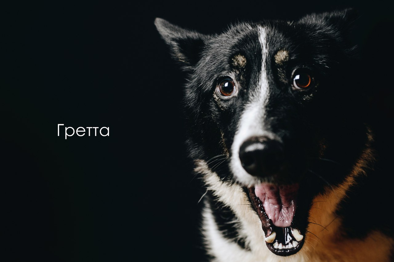 «Верный друг»: особенная собака нуждается в особенном отношении