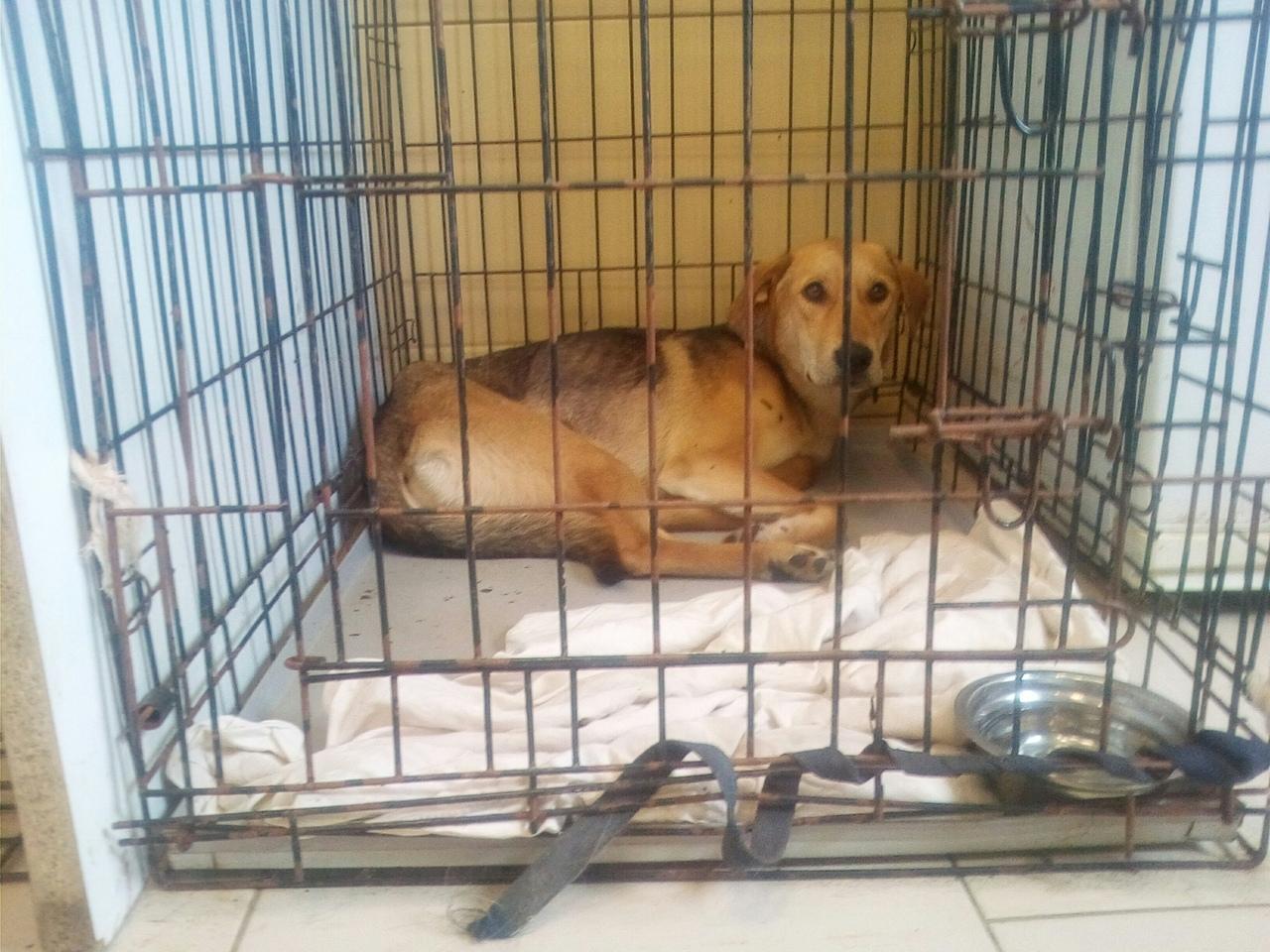 За полгода в Великом Новгороде на бесплатную стерилизацию животных поступило более 1300 заявок