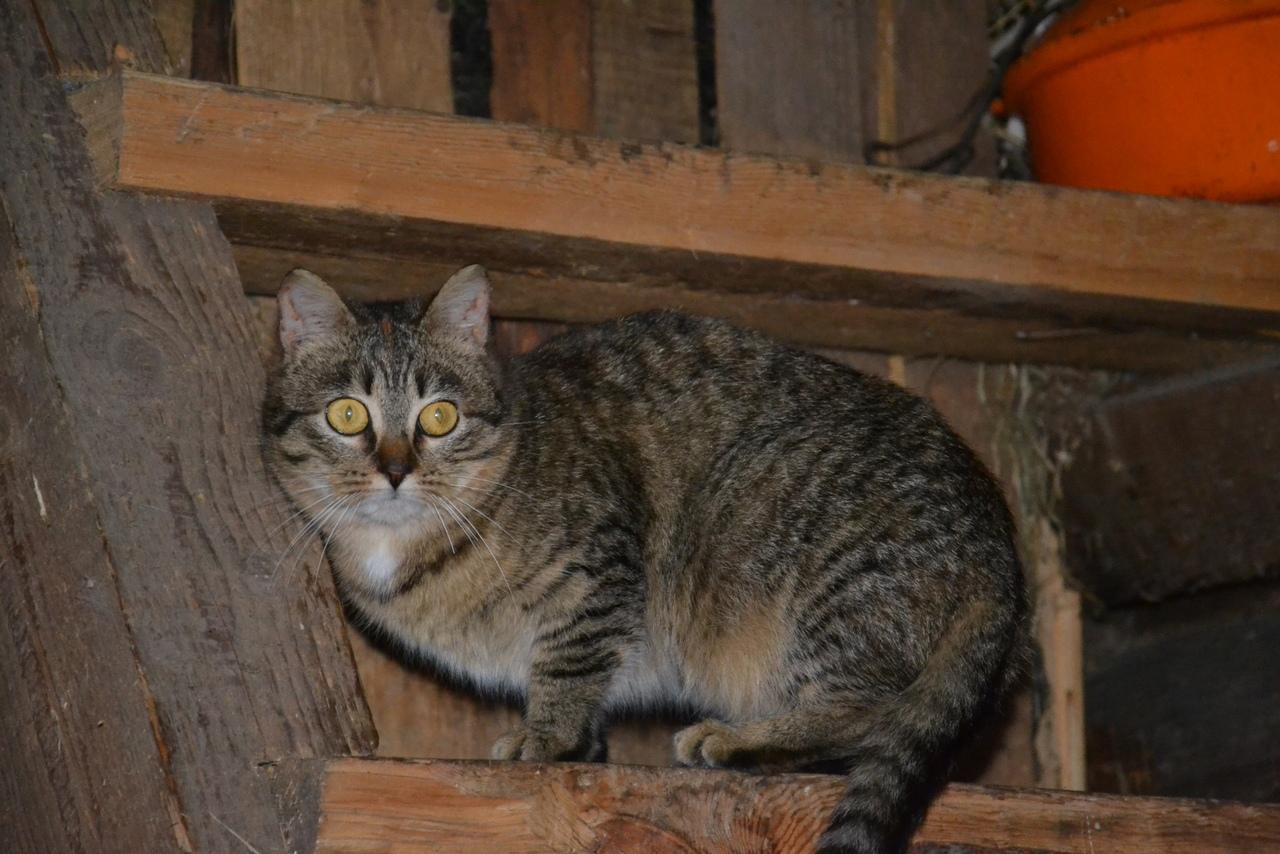 Брошенные в Хвойнинском районе кошки оказались в критической ситуации