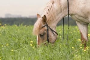 В Новгородской области спор цыган, что круче — ВАЗ или лошадь – закончился убийством