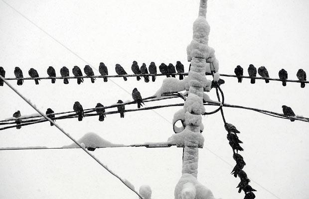 Новгородские энергетики защищают птиц, защищаясь от них
