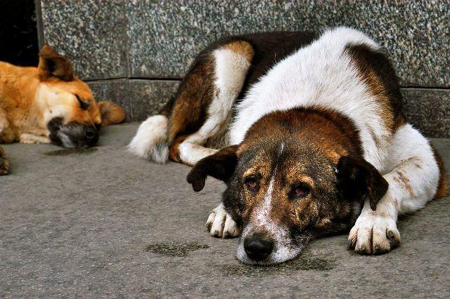 Жители Демянского района обеспокоены ситуацией с бездомными животными