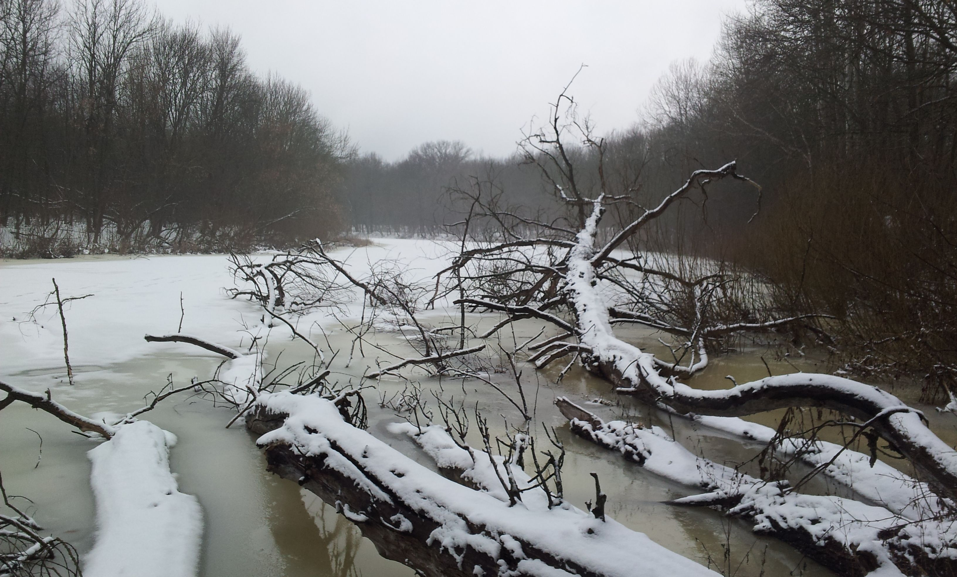 В Маловишерском районе Opel застрял в болоте. Пострадали двое