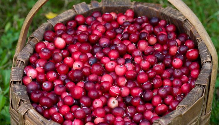 В Новгородской области на 800 000 рублей оштрафован ИП за неуведомление о прибытии двух иностранцев на сбор ягод и грибов