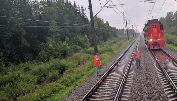 Петербуржец, едва не утонувший в маловишерском болоте, спасся благодаря поезду