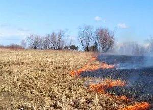 В Новгородском районе горит поле рядом с Михайло-Клопским монастырем