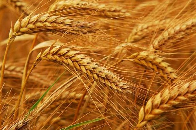Новгородцы изучают опыт белорусских аграриев