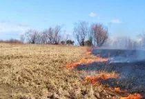 Озверели, но не звери: в Солецком районе на колхозном поле обнаружены останки животных
