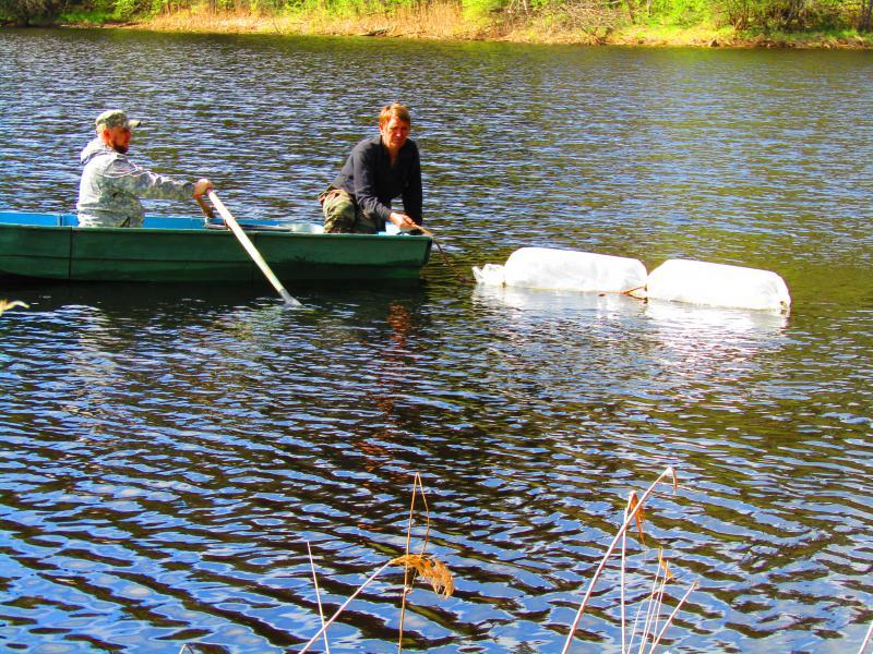 10 тысяч личинок щуки осваивают пруды Валдайского парка